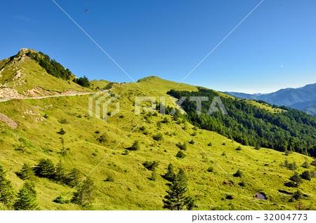图库照片: 森林 树林 天空