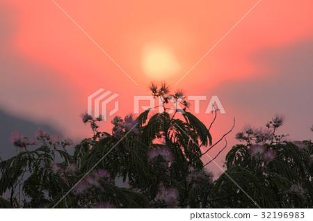 图库照片: 日落 夕阳 合欢树