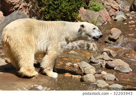 图库照片: 北极熊 横滨 动物园
