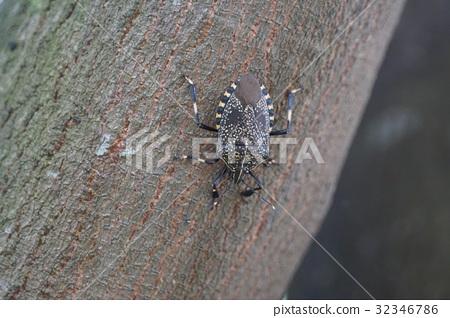 图库照片: 害虫 动物 成虫