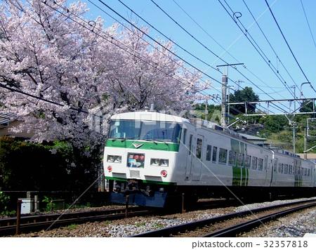 图库照片: 樱花 樱桃树 东海道本线