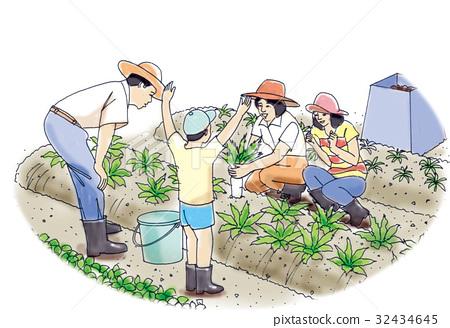 首页 插图 人物 男女 情侣/夫妻 菜园 插图 家庭  *pixta限定素材仅在