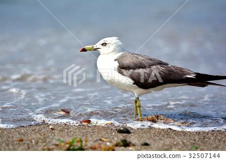 海鸟 首页 照片 动物_鸟儿 鸟儿 海鸥 鸟儿 鸟 海鸟  *pixta限定素材