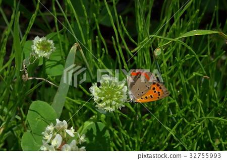 图库照片: 蝴蝶 户外 树叶