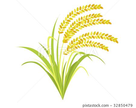 图库插图: 水稻 稻穗 矢量