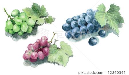 图库插图: 葡萄 水彩画 水果