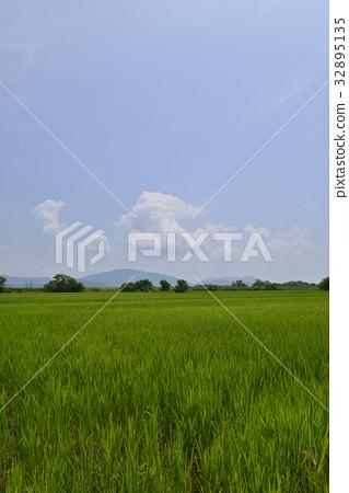图库照片: 风景 近江八幡市 夏天