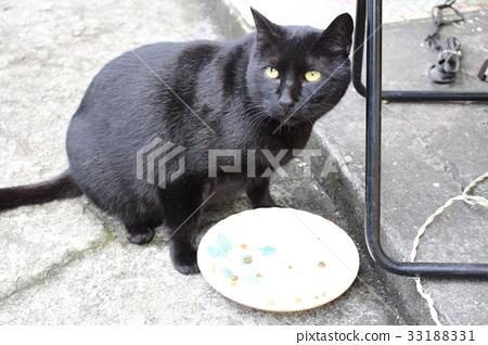 图库照片: 黑猫 乞求 可爱