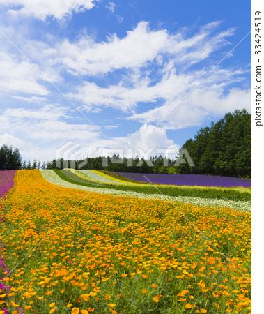 图库照片: 富良野 花园 风景