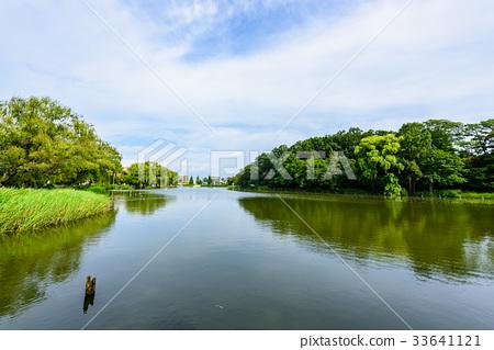 图库照片: 石神井公园 风景 池塘