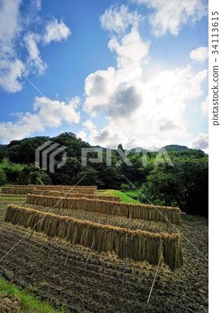 图库照片: 鸭川 稻田 水稻丰收