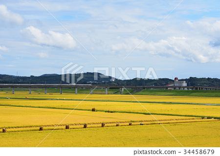 风景_自然 田地_稻田 稻田 照片 稻田 稻穗 丰收 首页 照片 风景_自然