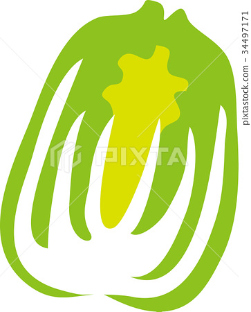 蔬菜_食品 叶_叶菜类 大白菜 插图 矢量 大白菜 蔬菜 首页 插图 蔬菜图片
