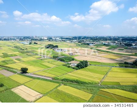 风景_自然 田地_稻田 稻田 鸟瞰图 空中拍摄 航空  *pixta限定素材仅