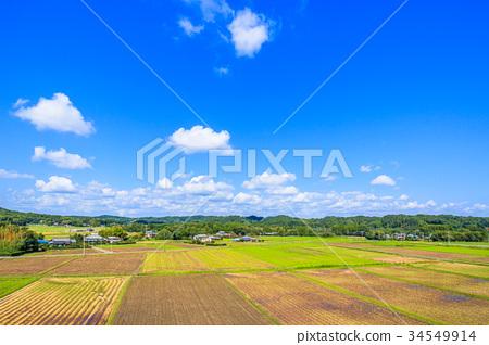 图库照片: 风景 稻田 秋天