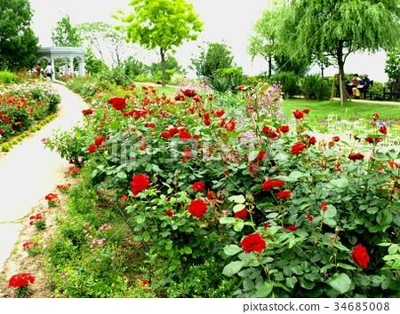 图库照片: 秋天盛开玫瑰园,风景,丛,红色玫瑰