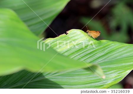 图库照片: 蝴蝶 树叶 叶子
