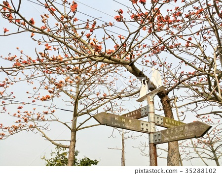 花朵 首页 照片 人物 男女 日本人 木棉树 木棉 花朵  *pixta限定素材
