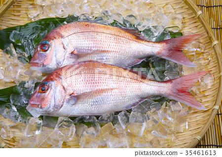 鱼_海鲜 海水鱼 鲷鱼 照片 真鲷 鲷鱼 鲷 首页 照片 鱼_海鲜 海水鱼
