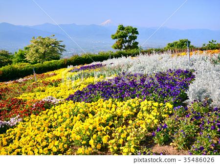 照片素材(图片): 风景 笛吹河水果园 春天