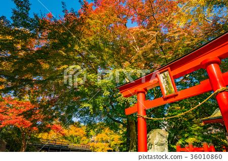 图库照片: 大月市saruhashi的秋天风景2017年