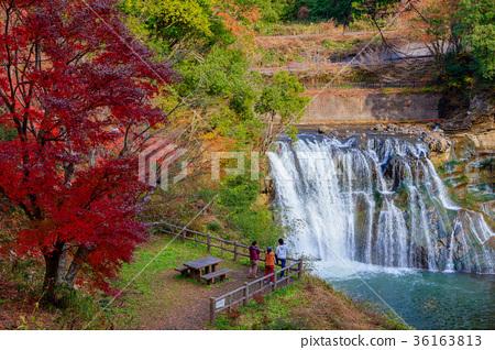 图库照片: 鹿儿岛瀑布 枫树 枫叶