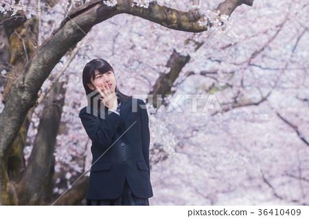 图库照片: 樱花 樱桃树 初中生