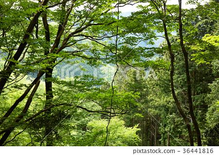 日本人 照片 风景 自然 背景 首页 照片 人物 男女 日本人 风景 自然