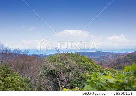 图库照片: 国东半岛 枫树 枫叶