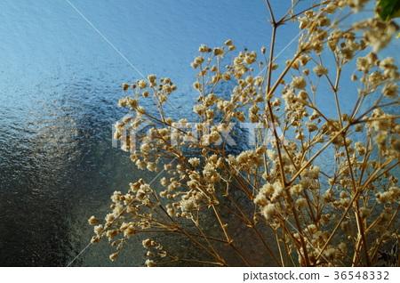 图库照片: 干花 石头花 花朵