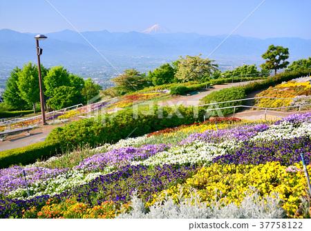 图库照片: 风景 富士山 笛吹河水果园