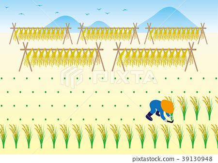 图库插图: 矢量 水稻丰收 水稻