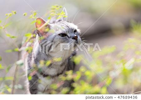 照片素材(图片): 一只猫在一个晴天