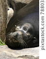 Sunbathing of Sea Lions 78803