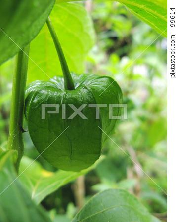 Cylindrical green 99614