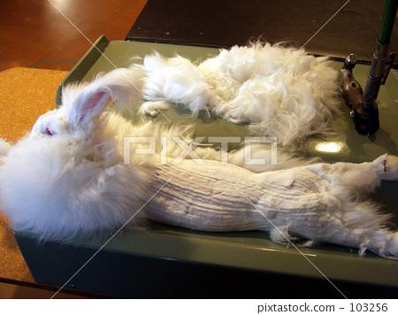 토끼 털 깎기 2 103256
