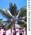 Waikiki, palm tree, vacation 114333