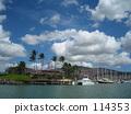 palm tree, coconut palm, blue ocean 114353