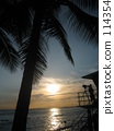 coconut palm, waikiki beach, honolulu 114354