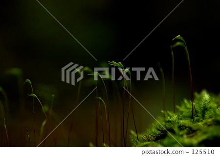 moss, forest, wood 125510