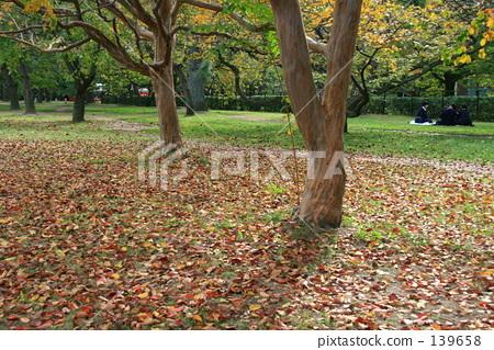 낙엽 139658
