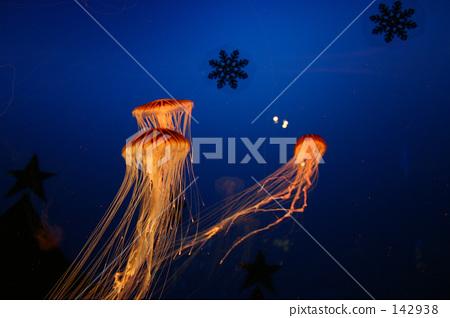 Jellyfish 142938