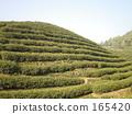 杭州 中国 瓷器 165420