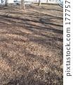 komazawa olympic park, dead leaf, dry leaves 177757