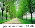 Tree trees 194502