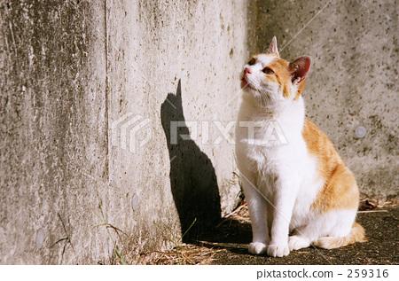 Mom Cat 259316