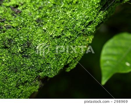 Moss 298969