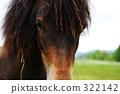 與馬交談 322142