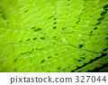 tropic, tropical, tokyo 327044
