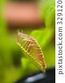 植物园 食肉植物 食虫植物 329120